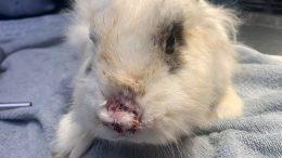 PRESSEMEDDELELSE 44 kaniner overdraget til Dyrenes Beskyttelse levede i en halv meter affoering