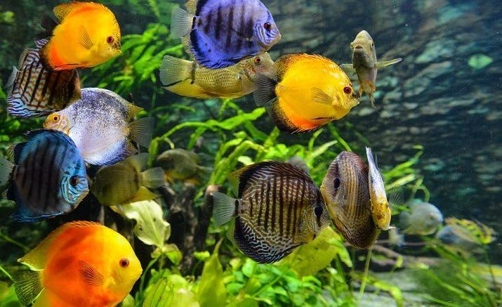 PRESSEMEDDELELSE Akvarier skal vaere unikke og stoerre end nogensinde foer
