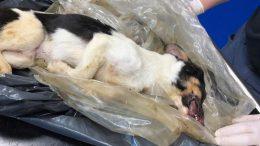 PRESSEMEDDELELSE Grov vanroegt mindst én hund sultet ihjel