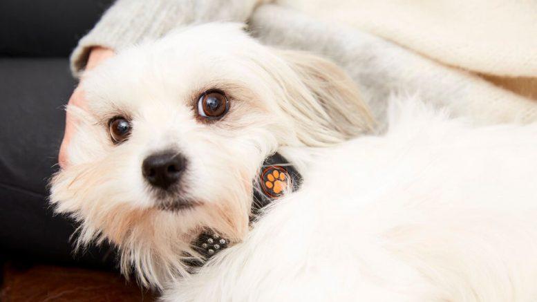 PRESSEMEDDELELSE Nyt smartwatch til hunde oeger livskvaliteten for baade kaeledyr og ejer