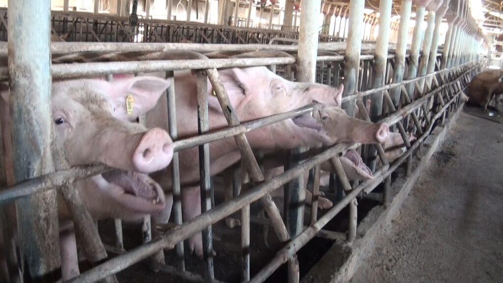 PRESSEMEDDELELSE 142 internationale forskere kraever stop for tremme dyr i landbruget