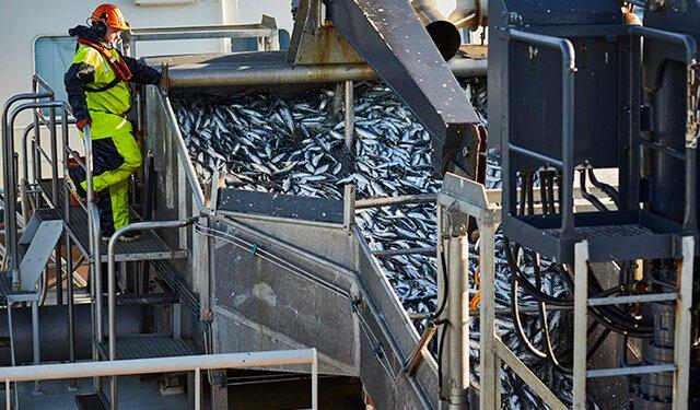 PRESSEMEDDELELSE Fiskere forskere og Dyrenes Beskyttelse undersoeger for foerste gang dyrevelfaerd i fiskeriet